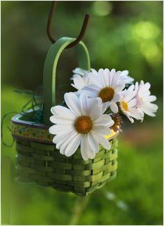 lovely little daisy basket Daisy Love, Daisy Daisy, Good Morning Quotes, Morning Sayings, Morning Pics, Morning Dew, Morning Messages, Morning Images, Ikebana