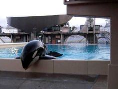 Stereotypical Behavior in Captive Whales and Dolphins | Cetacean Inspiration