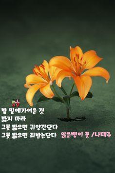 詩  앉은뱅이 꽃 / 나태주  발 밑에 가여운 것 밟지 마라 그 꽃 밟으면 귀양간단다 그 꽃 밟으면 죄받는단다