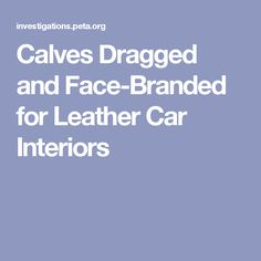 Calves Dragged and Face-Branded for Leather Car Interiors