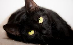 Black cat, gorgeous - Tap the link now to see all of our cool cat collections!