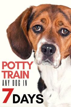 Potty train or housebreak any dog or puppy in 7 days or less. Check out this post on how to stop your dog from peeing in the house. The sooner you start the better. Check it out.