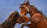 Equine - Images | The Art of Seeing - Photography by Ken Lee