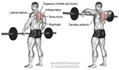 Wide grip upright row. A compound exercise. Target muscle: Lateral Deltoid. Synergistic muscles: Anterior Deltoid, Supraspinatus, Brachialis, Brachioradialis, Biceps Brachii, Middle and Lower Trapezii, Serratus Anterior, Infraspinatus, and Teres Minor. NOTE: This exercise can harm your shoulders if you do not perform it correctly. Visit site to learn proper form and technique.