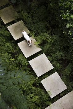 Jack Russell Terrier walking on the concrete stepping slabs that float across the weeds. In a residential project in North Sydney designed by Michael Bates of Bates Landscape. Photography courtesy of Bates Landscape. Contemporary Landscape, Contemporary Interior, Contemporary Stairs, Contemporary Building, Contemporary Cottage, Contemporary Apartment, Contemporary Wallpaper, Contemporary Office, Contemporary Architecture