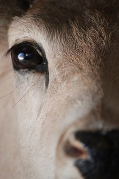 I love looking into the eyes of the deer that line the path where I walk.