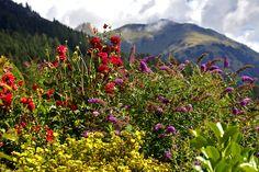 Mountains, Nature, Travel, Flowers, Nice Asses, Naturaleza, Viajes, Destinations, Traveling