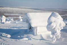 Finland travel. Beautiful winter landscape with snowy trees. Lapland tours. Finland vacation.