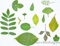Botanical Fine Art Photography Leaf Study by LOVEnLAVISH on Etsy, $18.00