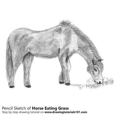Horse Eating Grass with Pencils