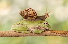 17 graciosas fotos de animales comportándose de manera muy extraña