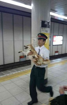 Shiba Inu is Upset He's Not Allowed on the Subway, Gets Carried Out by Authorities Animals And Pets, Funny Animals, Cute Animals, Chien Shiba Inu, Cute Puppies, Cute Dogs, Japanese Dogs, I Love Dogs, Funny Cute