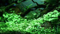 Details par florianf. #aquascaping #aquarium #fish
