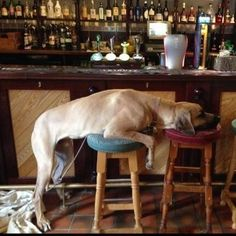 The Badger Inn, Cornwall | 22 Adorable Pictures Of Dogs In Their Favourite Pubs