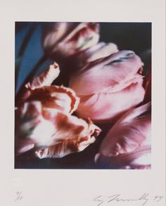 desimonewayland: Cy Twombly, Tulips III no. 1, 1993 - Carbon print