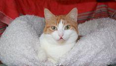 smiling at you :) by Loreta Tavoraite on YouPic Canon Ef, Smile, Cats, Creative, Animals, Gatos, Animaux, Animales, Cat