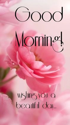 Good Morning Beautiful Pictures, Good Morning Images Flowers, Good Morning Photos, Good Morning Gif, Good Morning Greetings, Morning Pictures, Morning Wish, Funny Good Morning Messages, Beautiful Morning Messages
