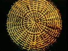 These original films of Cymatics experiments were made in the 1960's by Swiss scientist, Dr. Hans Jenny.    They are now available on a single composite DVD, entitled Cymatic SoundScapes: Bringing Matter to Life with Sound. www.cymaticsource.com