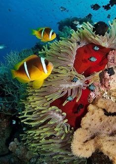 flag of Ocean Simply breathtaking - sea life Life Under The Sea, Under The Ocean, Sea And Ocean, Underwater Creatures, Underwater Life, Ocean Creatures, Colorful Fish, Tropical Fish, Fauna Marina