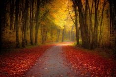 In the Autumn light by olivierferrari #fadighanemmd
