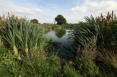 Purity's wetland system.