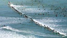 2009 Guinness World Record Most Surfers on a Wave. (Photo: Argus - Jim McLagan) Taken at Muizenberg Beach - home of surfing in Cape Town. Hermosa Beach, Laguna Beach, Ocean Beach, Surf Forecast, Cardiff By The Sea, Guinness World, Pacific Beach, California Dreamin', Huntington Beach