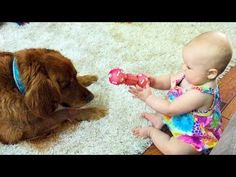 Funny and Cute Babies and Dogs Playing Together Compilation 2017… #funnypetvideos #funnyanimals