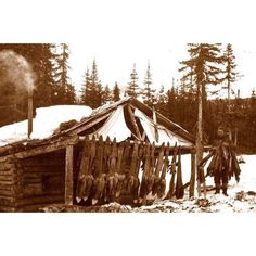 Photo of a trapper's cabin in Alaska. Repost from Furbearer Facts. #trapping