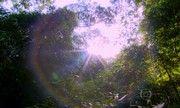 Globo Repórter - Rio seria quatro vezes mais quente se não houvesse a Floresta da Tijuca   globo.tv