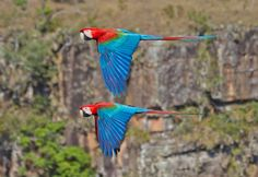 Photo of the Day: Red-and-Green Macaw | Audubon Magazine