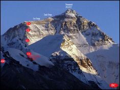 mount everest fossils - Google Search