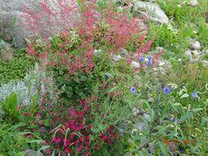 kesä Nature, Plants, Naturaleza, Planters, Nature Illustration, Outdoors, Plant, Planting, Natural