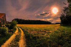 Golden field by Nico Hofmann on 500px