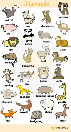 0 0 0 loves animals – keeping them as pets, seeing them at the zoo or visiting a farm… List … ANIMALS! List of animal names with animal pictures in English. Learn these types of animals to increase your vocabulary about animals in English and thus e Learning English For Kids, Kids English, English Language Learning, English Study, Teaching English, Education English, English Verbs, English Vocabulary Words, Learn English Words