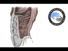 Lumbalgia y ciática, como fortalecer el abdomen para prevenir el dolor / Fisioterapia a tu alcance