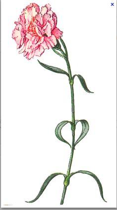 Jan birth flower...for Johnathon :)  Nephew also shares same date....mmmmm motherhood spread coming together