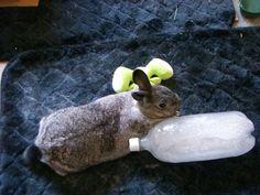 my bunny Angel