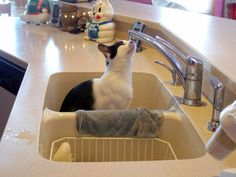 24 Pets Helping With Housework
