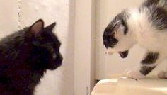 Fixing a relationship between cats