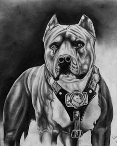 a drawing of a pitbull hope you like it! Pitbull Tattoo, Pitbull Drawing, Bull Tattoos, Dark Art Drawings, Animal Drawings, Dog Memorial Tattoos, Bulldog Mascot, Lowrider Art, Chicano Art