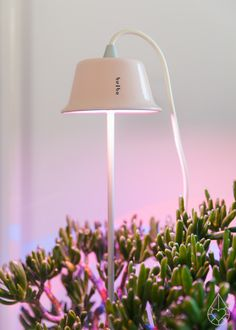 Rediscover the beauty of nature indoors and grow your petite plants even when it's grey outside with the charming Cynara LED light by Bulbo.
