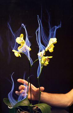 Botanicus Interacticus: Interactive Plant Technology, Disney Research.