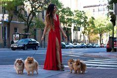 glamourous dog walk