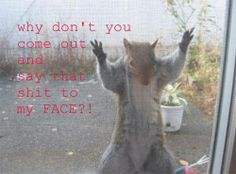 why dont you come out and say that to my face?! #squirrel #quote