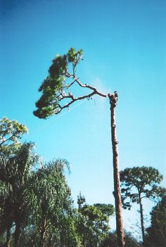 arborist - Google Search Tree Arborist, Tree Specialist, Tree Surgeons, Tree Pruning, Custom Trucks, Old Photos, Climbing, Around The Worlds, Lumberjacks
