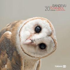 20. Randevu İstanbul Uluslararası Film Festivali'nin programı bellioldu | NTV