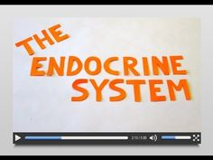 A video that describes the endocrine system and how it relates to homeostasis and hormones like insulin.; for older elementary kids (C3; W11)