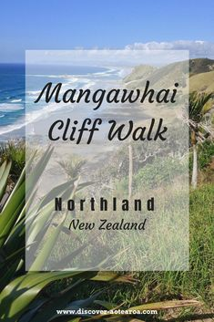Only 90 minutes from Auckland, Mangawhai cliff walk is one of the best short walks in New Zealand. Click my article if you're not convinced North Island New Zealand, Stuff To Do, Things To Do, Bay Of Islands, Rocky Shore, Visit Australia, New Zealand Travel, Travel Guides, Travel Tips