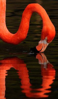 flamingo 2 (by Musicaltone)
