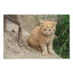 Cute Orange Tabby Kitten Photo